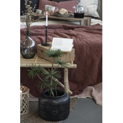 Bambuseske natur liten
